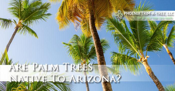 Are-Palm-Trees-Native-To-Arizona