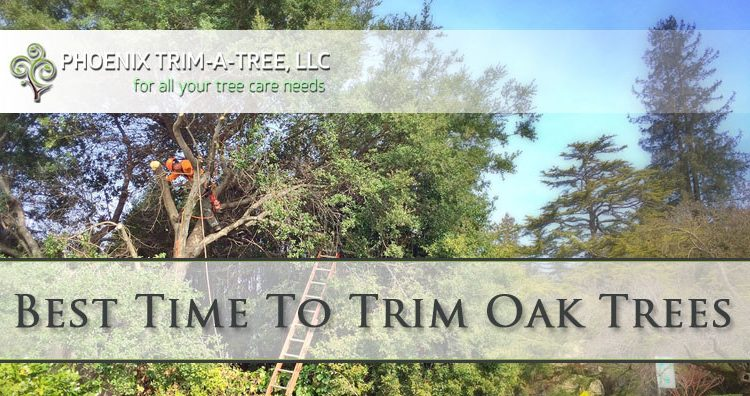 Best-Time-To-Trim-Oak-Trees