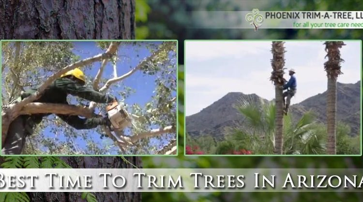 Best-Time-To-Trim-Trees-In-Arizona
