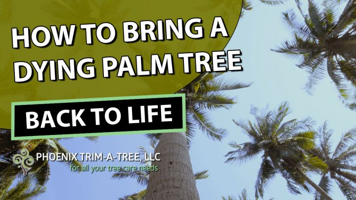 How-To-Bring-A-Dying-Palm-Tree-Back-To-Life