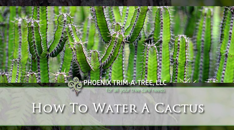How-To-Water-A-Cactus