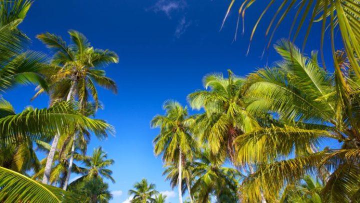 Has My Palm Tree Died