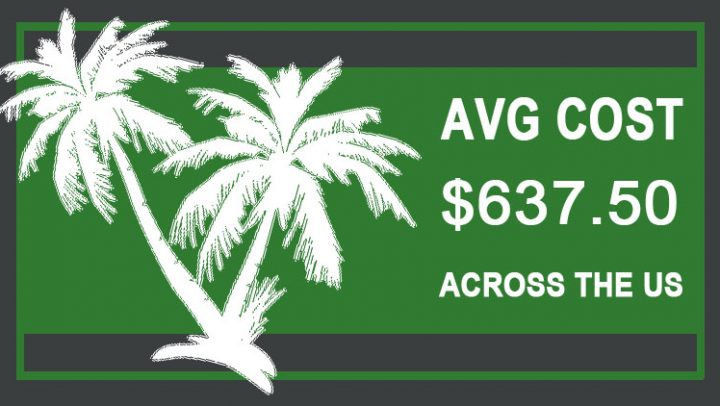 Palm-Tree-Trimming-Cost