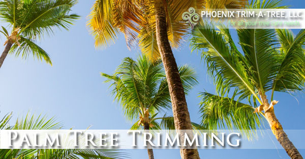 Palm-Tree-Trimming