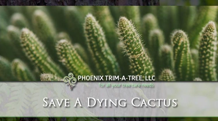 Save-A-Dying-Cactus-How-To