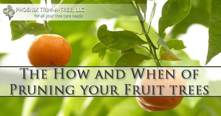 The-How-and-When-of-Pruning-your-Fruit-trees-Phoenix-AZ