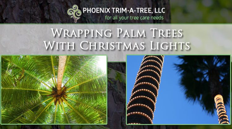 Wrapping-Palm-Trees-With-Christmas-Lights-1