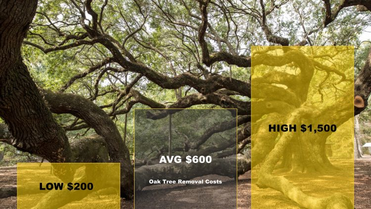 how-much-does-oak-tree-removal-cost