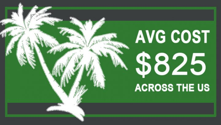 palm-tree-removal-cost