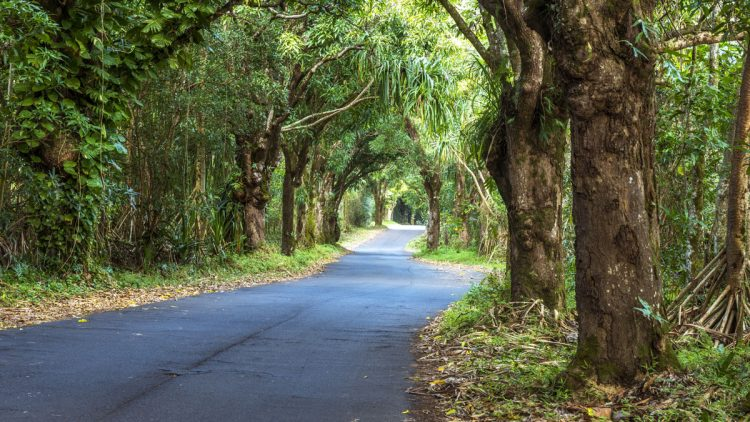 Canopy of trees over road
