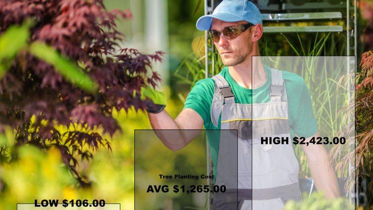 tree-planting-cost